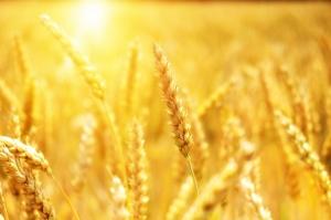 친환경 농업, 트렌드에 부합하는 발전방안 및 육성전략 수립해야